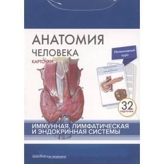 Анатомия человека: КАРТОЧКИ (32шт). Иммунная, лимфатическая и эндокринная системы Сапин М.Р. 2017 г. (Практическая медицина)