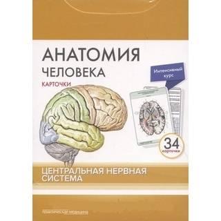Анатомия человека: КАРТОЧКИ (34 шт). Центральная нервная система Сапин М.Р. 2018 г. (Практическая медицина)